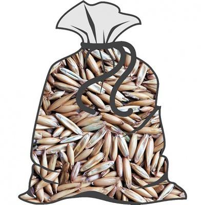 Oves (běžné balení 50kg)
