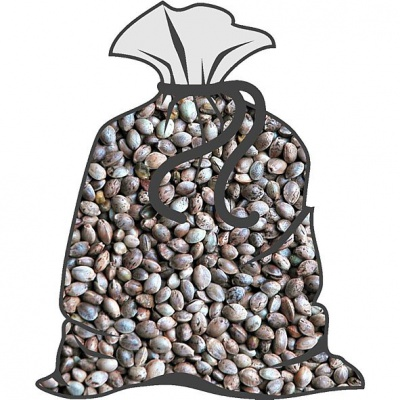 Semenec ( semeno konopí)